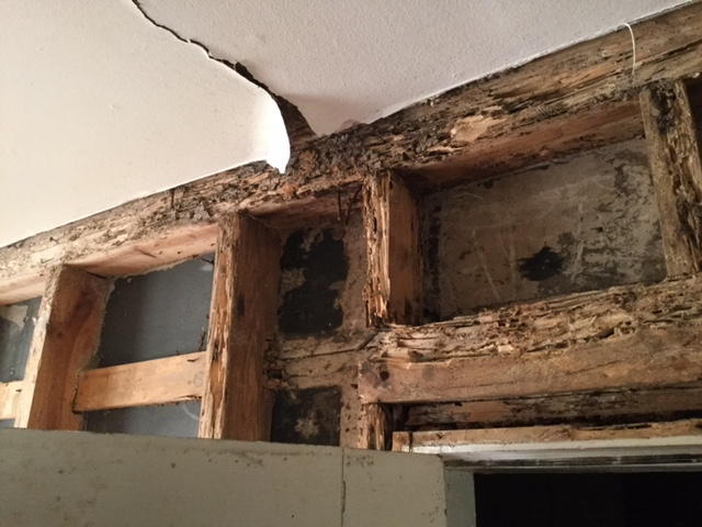 what does termine damage look like renovation house flip remodel Raleigh